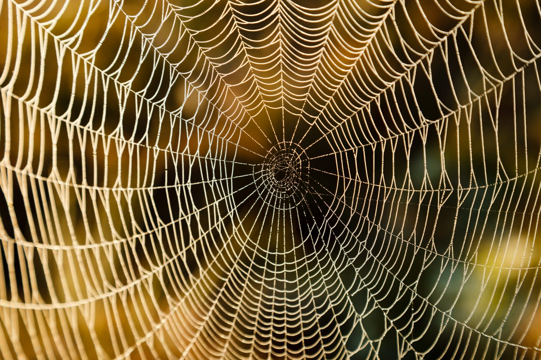 Spider Web representing Virality of social Media